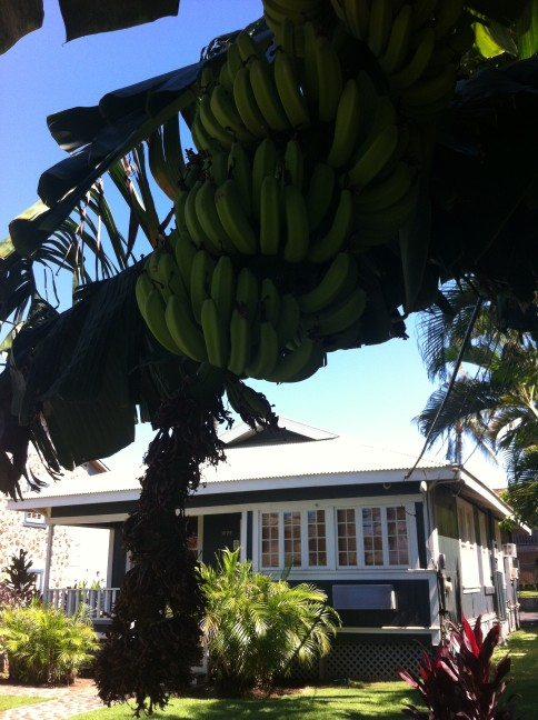 10 Ways to to Live a More Sustainable Hawaii Life